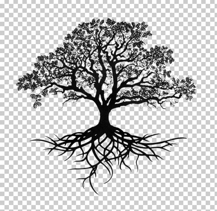 Southern live oak clipart clip royalty free stock Southern Live Oak Drawing Tree Sketch PNG, Clipart, Art ... clip royalty free stock