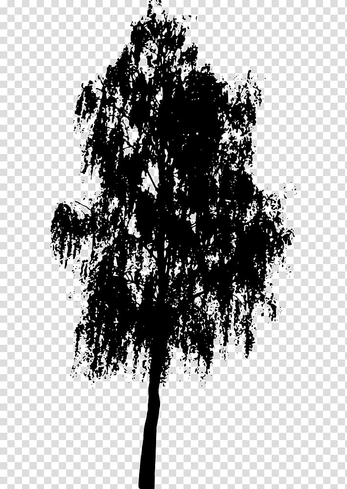 Southern live oak clipart graphic freeuse Tree Southern live oak Silhouette , tree transparent ... graphic freeuse