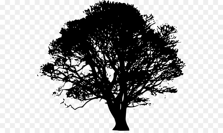 Southern live oak clipart picture free White Oak Tree Southern Live Oak Clip Ar #193667 - PNG ... picture free