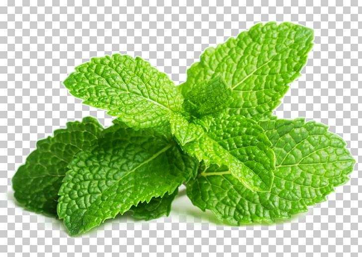 Spearmint clipart clip royalty free library Peppermint Spearmint Herb Mint Leaf Water Mint PNG, Clipart ... clip royalty free library