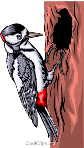 Specht clipart picture transparent download Pileated woodpecker Royalty Free Vector Clip Art ... picture transparent download