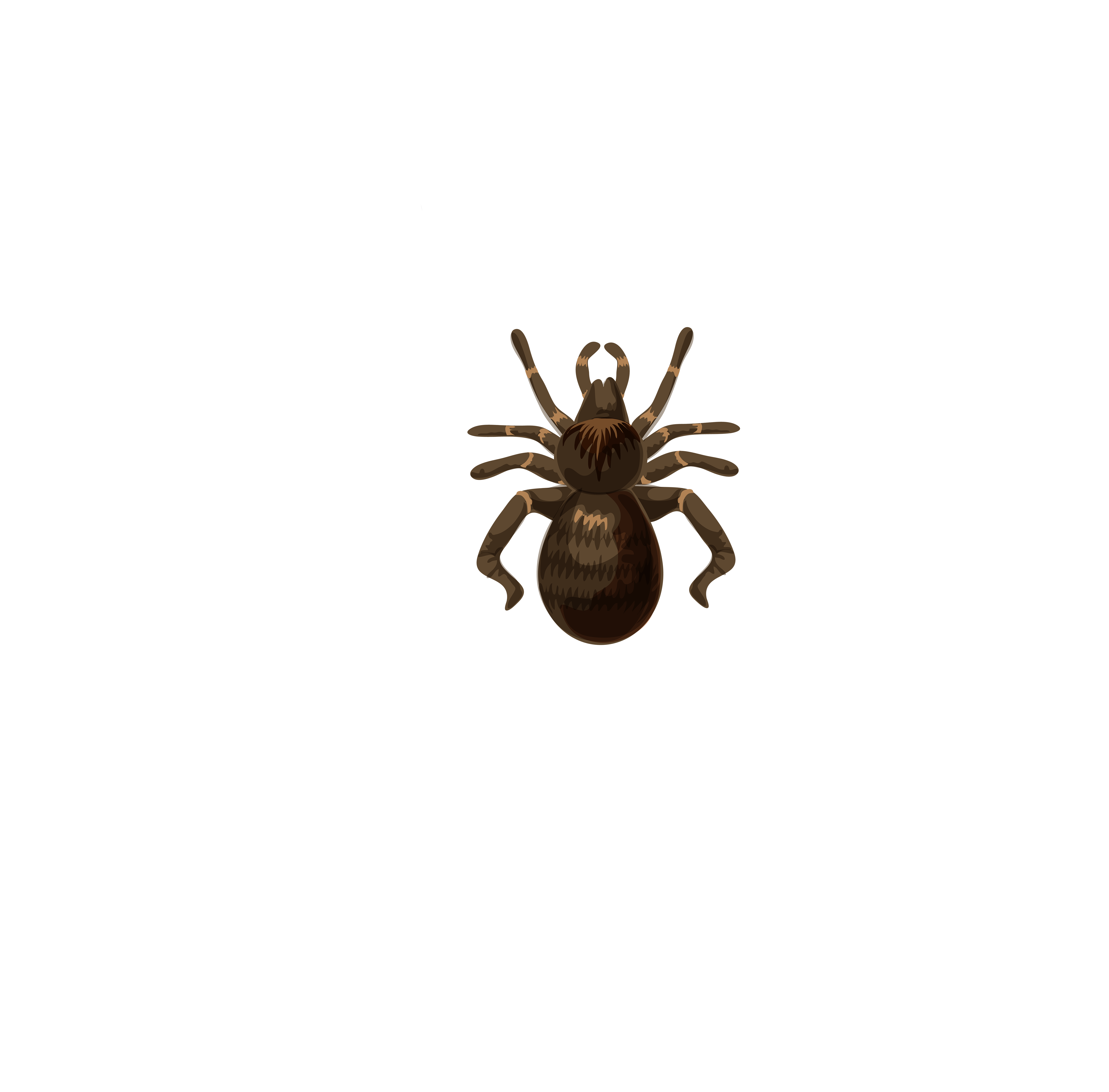 Spiders halloween clipart clip free Halloween Spider Web Transparent Clip Art Image | Gallery ... clip free