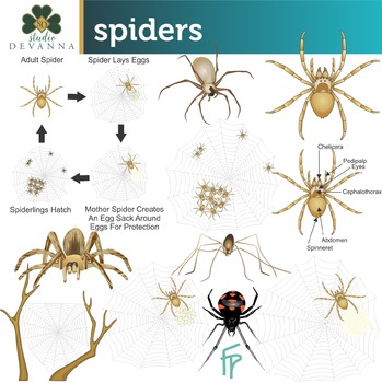 Spiderling clipart clip art free download Spiders Science Clip Art clip art free download