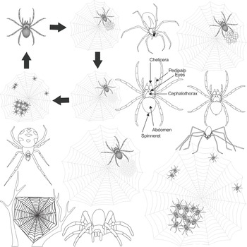 Spiderling clipart image freeuse stock Spiders Science Clip Art image freeuse stock