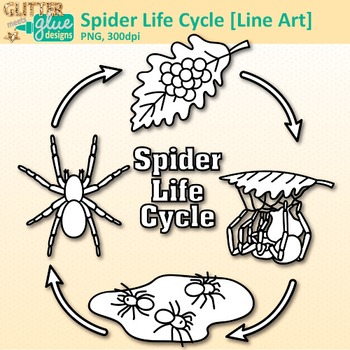 Spiderling clipart picture free download Spider Life Cycle Clip Art: Insect and Bug Graphics B&W {Glitter Meets Glue} picture free download