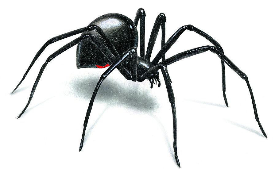 Spiderling clipart image royalty free download Free Black Widow Spider, Download Free Clip Art, Free Clip ... image royalty free download
