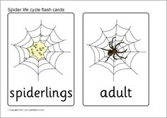 Spiderling clipart banner library download 19 Best Spider theme images in 2015 | Spider, Spider crafts banner library download
