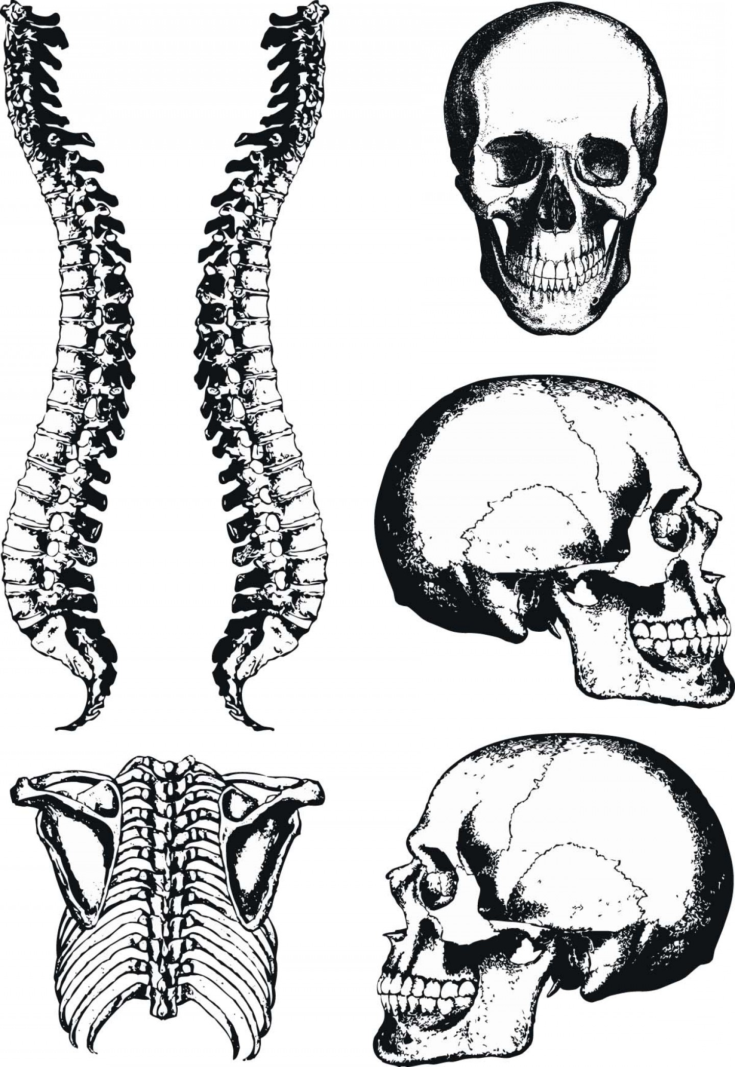 Spine vector clipart clipart royalty free library Human Anatomy Graphic Skull And Spine Vector | GeekChicPro clipart royalty free library