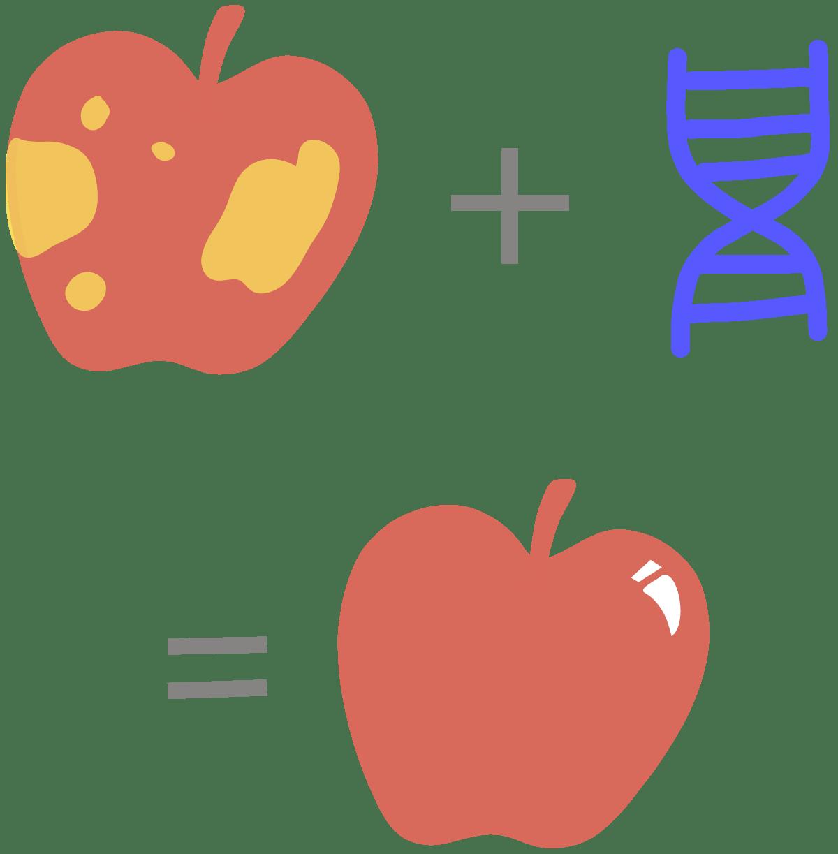 Split apple clipart picture Glossary - Innovative Genomics Institute (IGI) picture