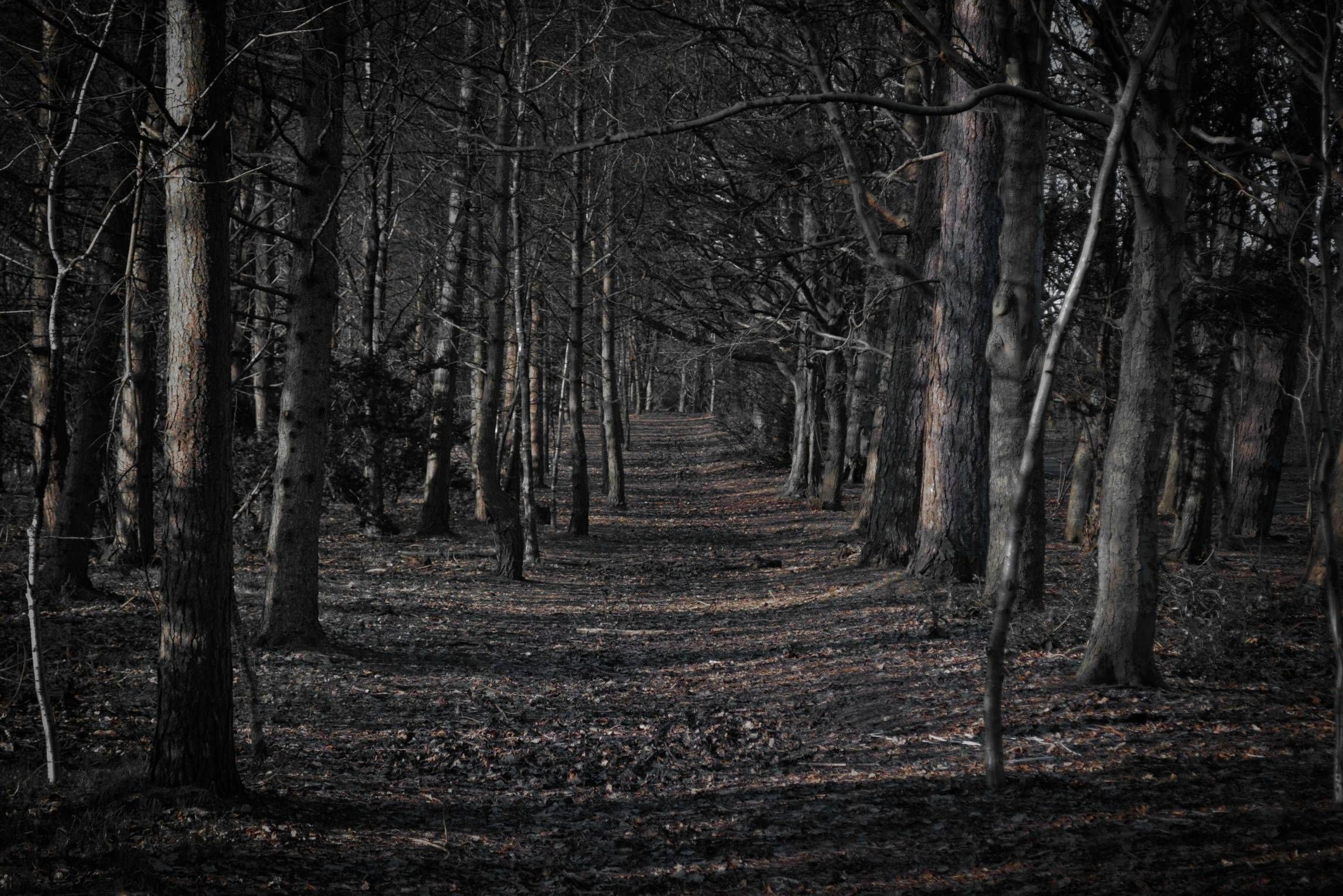 Spooky forest clipart image black and white download 66+ Creepy Forest Wallpapers on WallpaperPlay image black and white download