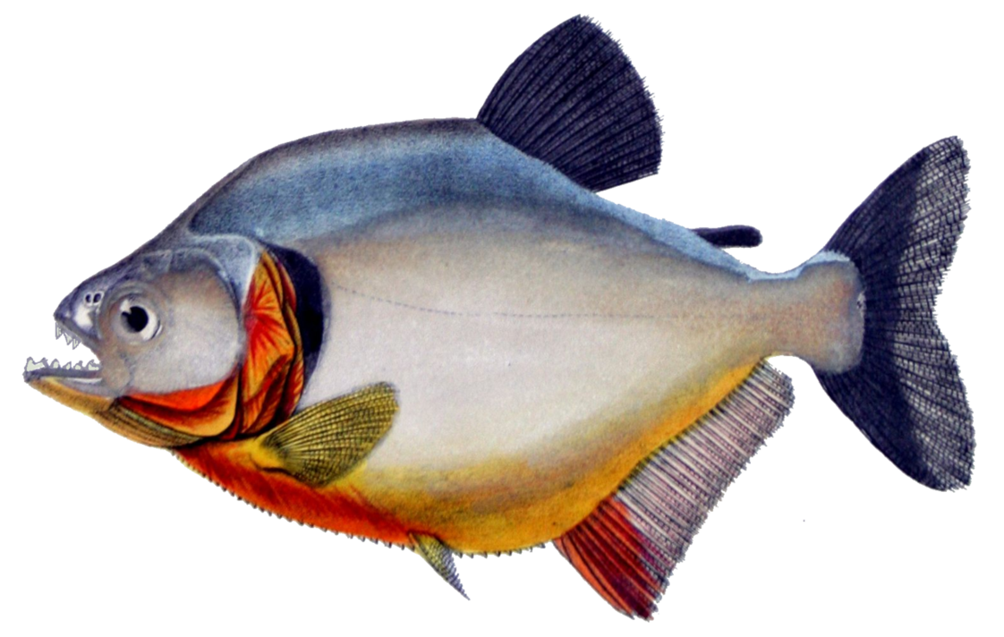 Spoonbill fish clipart clip art freeuse library express evaluate exhibit engage clip art freeuse library