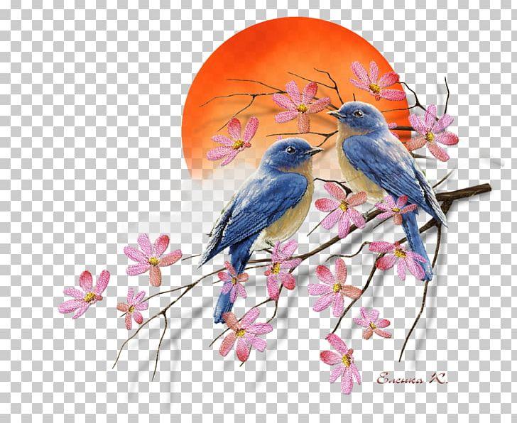 Spring bluebird clipart image free download Детский сад №5 Kindergarten Holiday Spring Earth Day PNG ... image free download