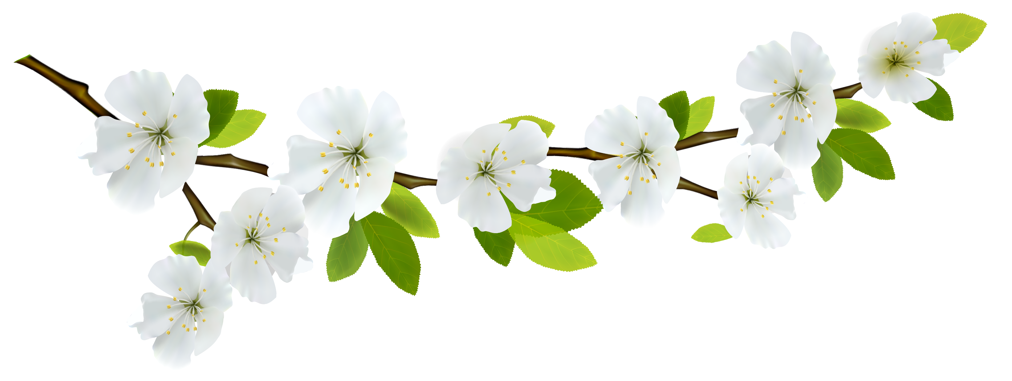 Spring branch clipart freeuse download Spring Branch White PNG Clipart | Gallery Yopriceville ... freeuse download