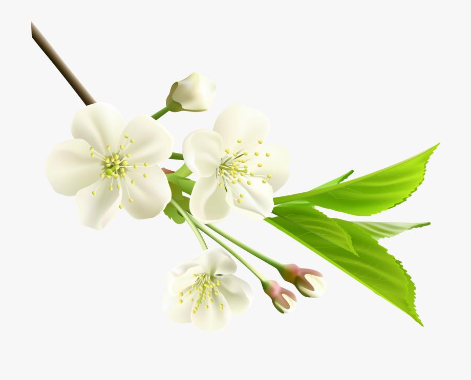 Spring branch clipart clip art royalty free Spring Branch With White Tree Flowers Png Clipart - White ... clip art royalty free