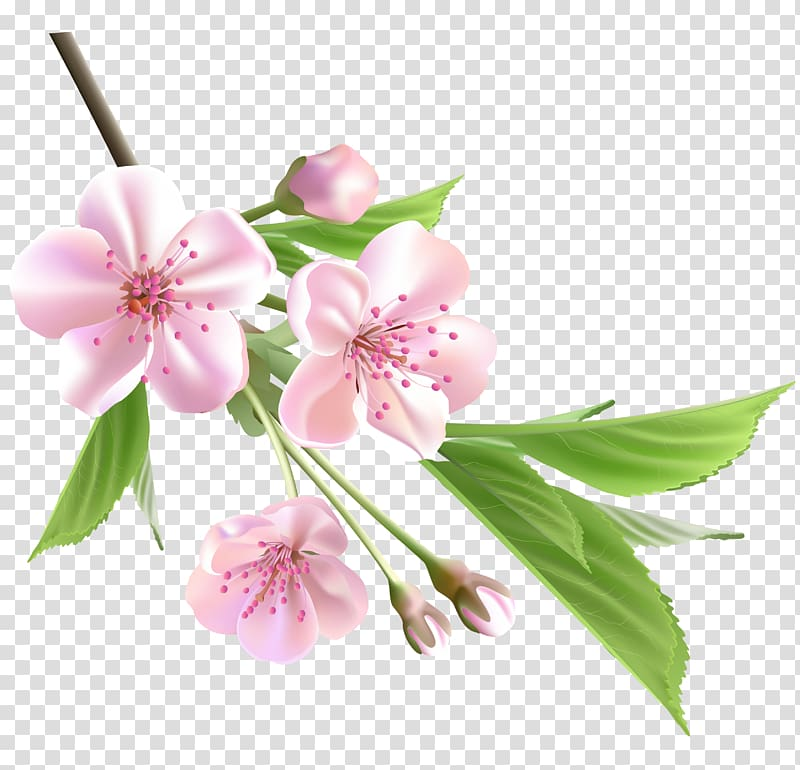 Spring branch clipart clip library Flower Drawing Tree , Spring Branch with Pink Tree Flowers ... clip library