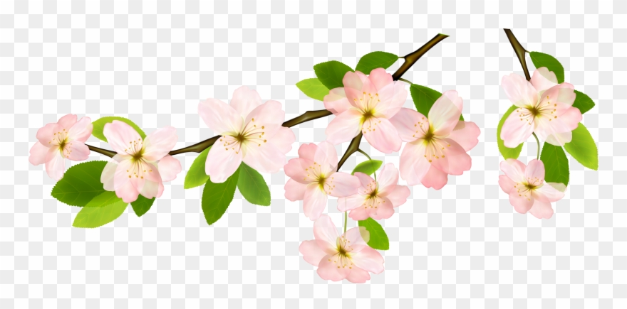 Spring clipart clear background