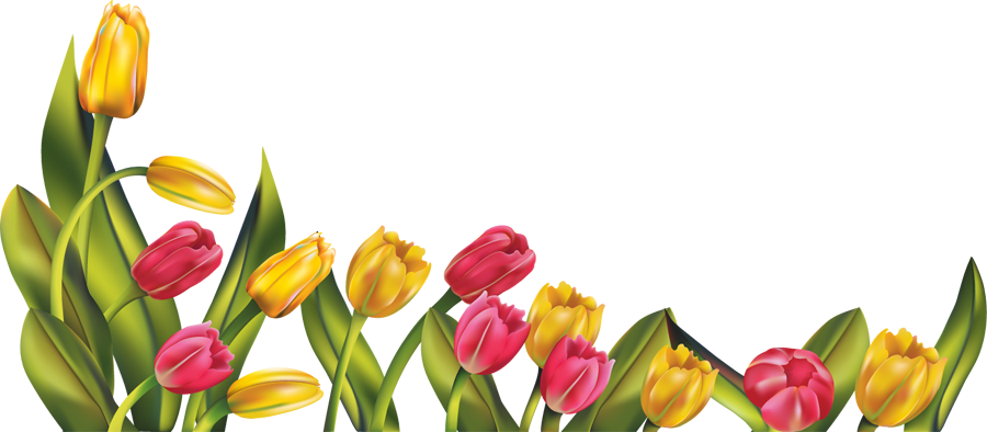 Yellow flower border clipart graphic royalty free Spring Borders png | res__tulip_border_png_by_hanabell1-d6lip4o.png ... graphic royalty free