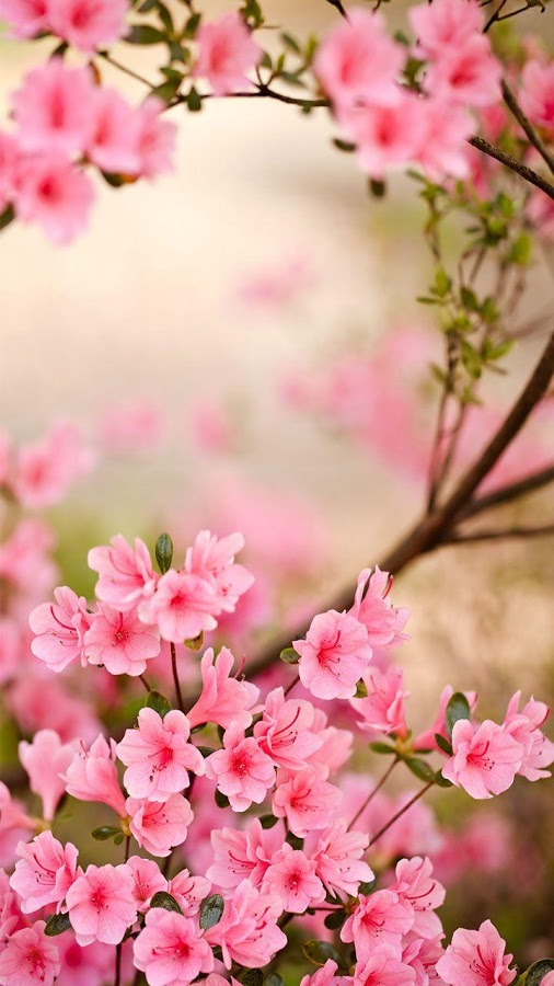 Spring flower pictures download picture library download Spring Flowers Live Wallpaper - Android Apps on Google Play picture library download