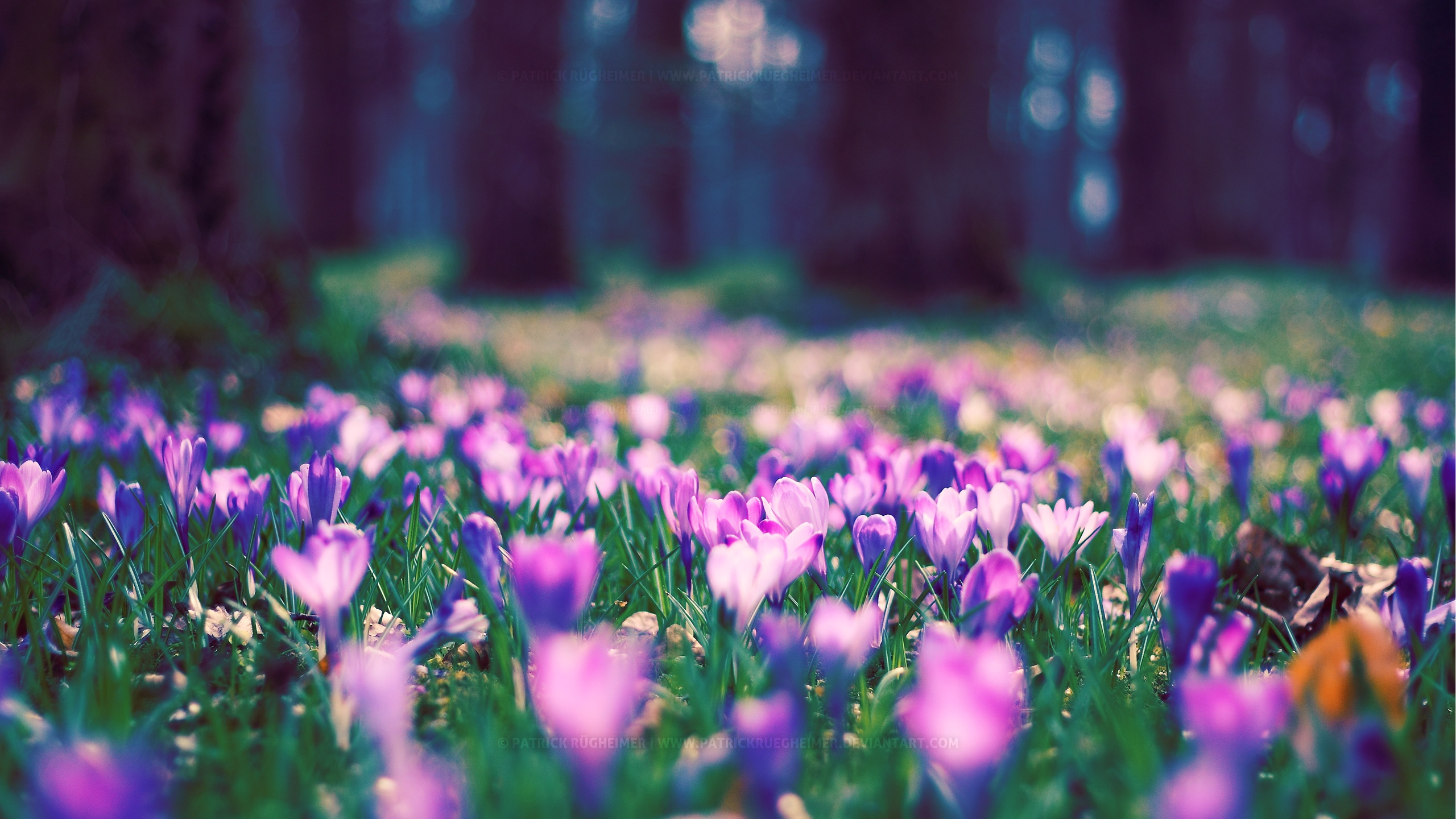 Spring flower pictures download picture free Spring flowers wallpaper nature wallpapers for free download about ... picture free