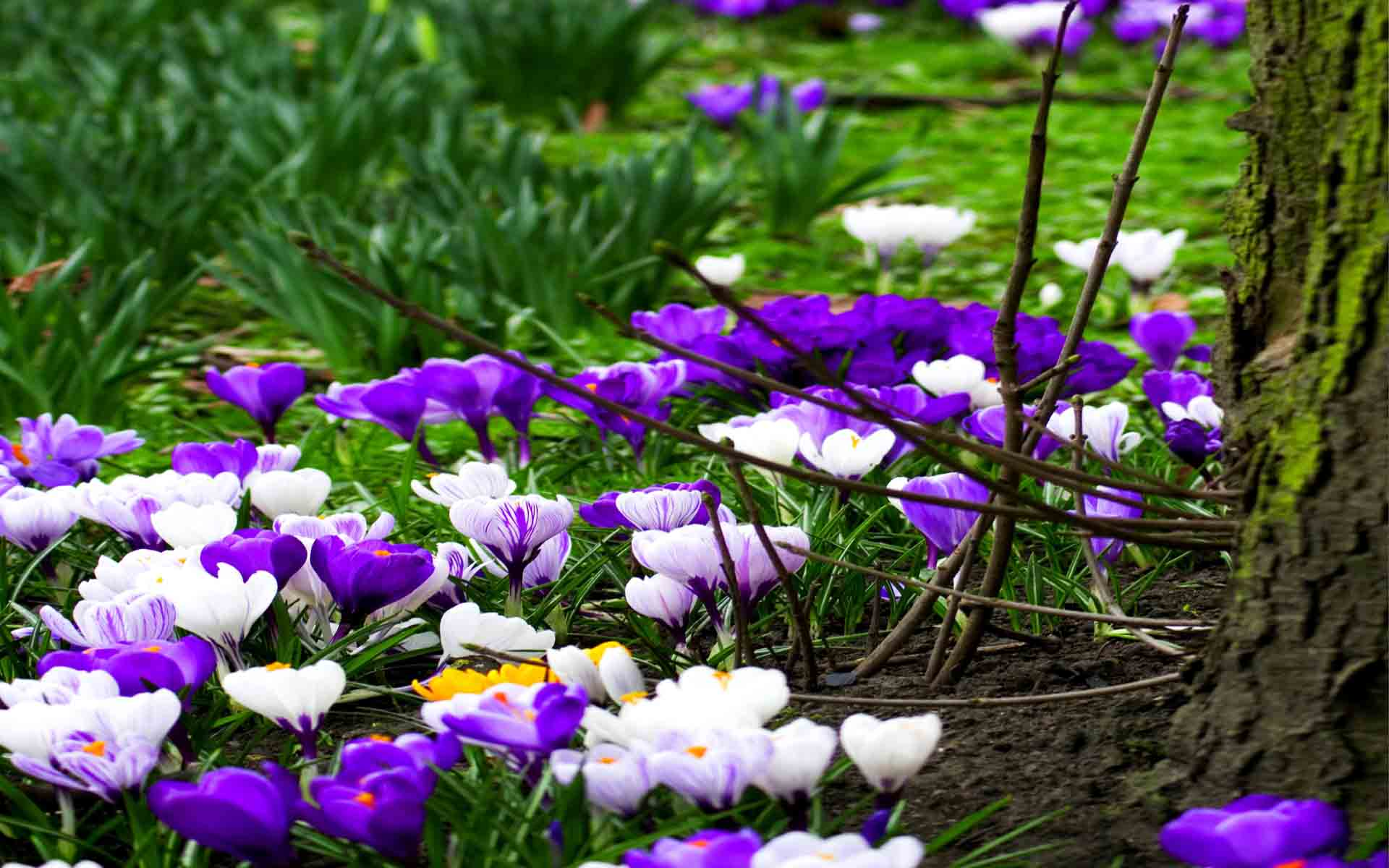 Spring flower pictures download library Spring Wallpaper Free Download library