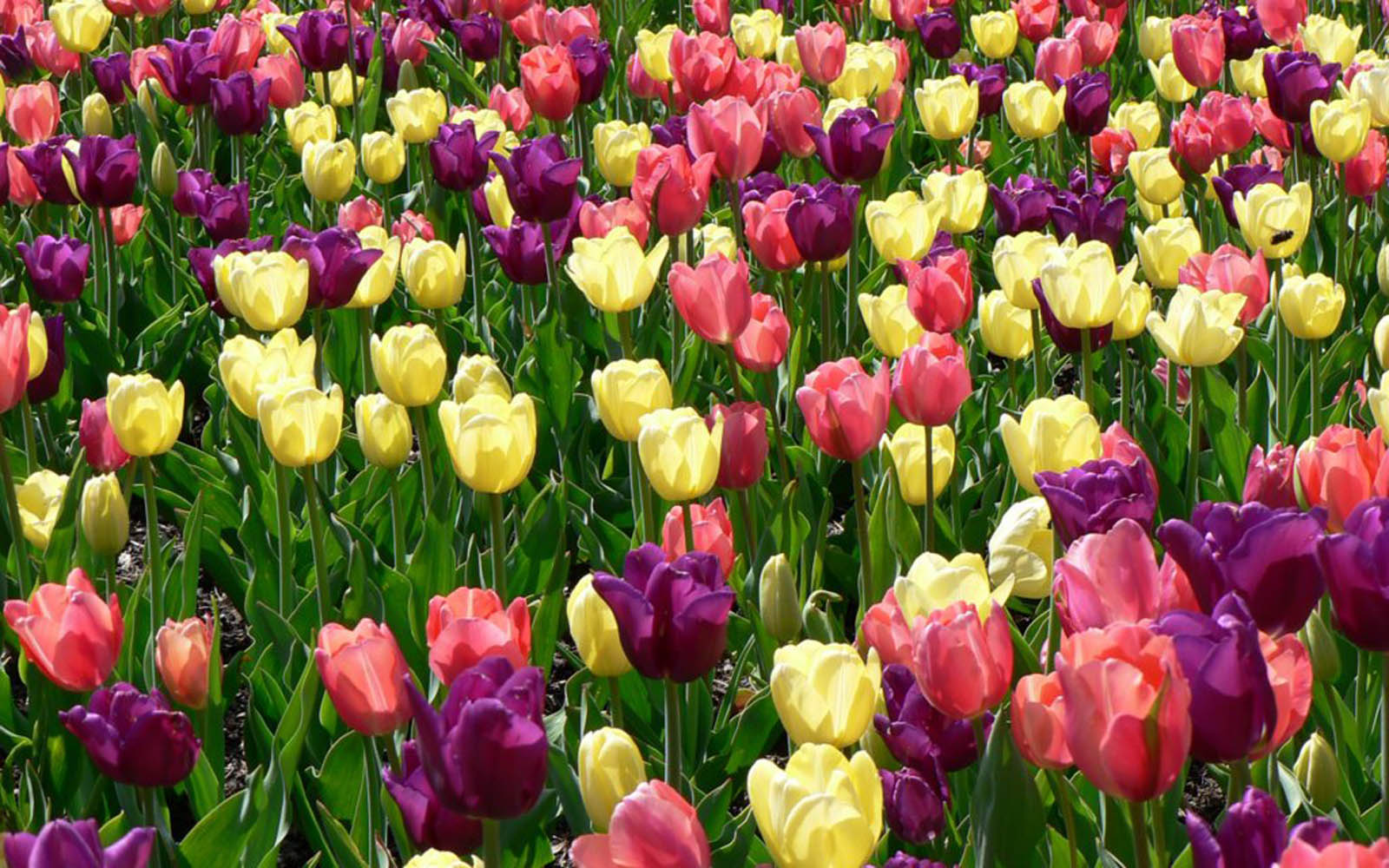 Spring flower pictures download picture Spring Flowers Wallpapers Free Download - 48+ Nice Photos picture