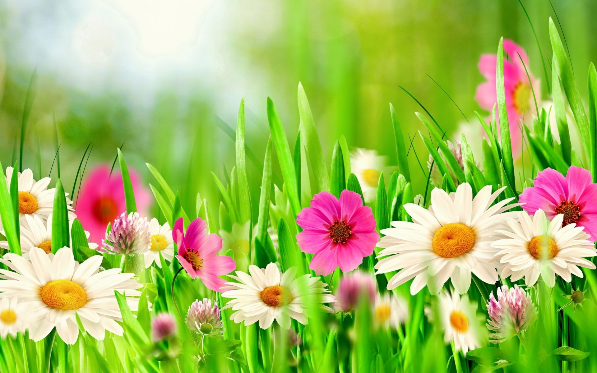 Spring flower pictures download freeuse library flowers wallpaper freeuse library