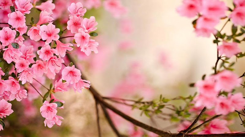 Spring flower pictures download vector stock Spring Flowers Live Wallpaper APK download - latest version for ... vector stock