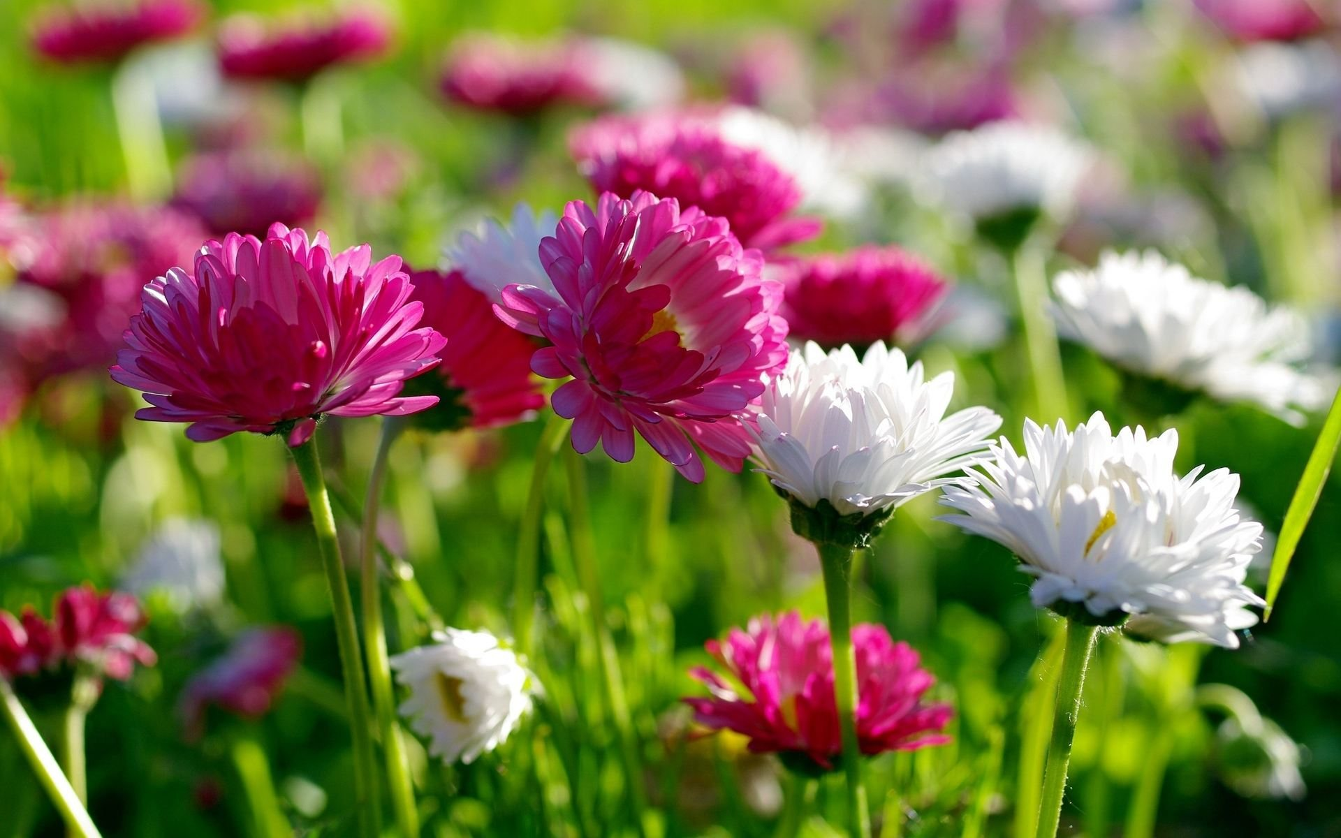 Spring flower pictures download clipart transparent stock Awesome Pics | Spring Flowers HD Widescreen Wallpapers (43+) clipart transparent stock