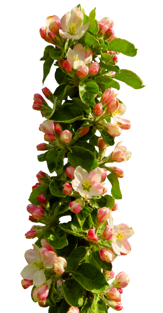 Spring flowers pictures free clipart stock Free Spring Flower PNG Transparent Image - peoplepng.com clipart stock
