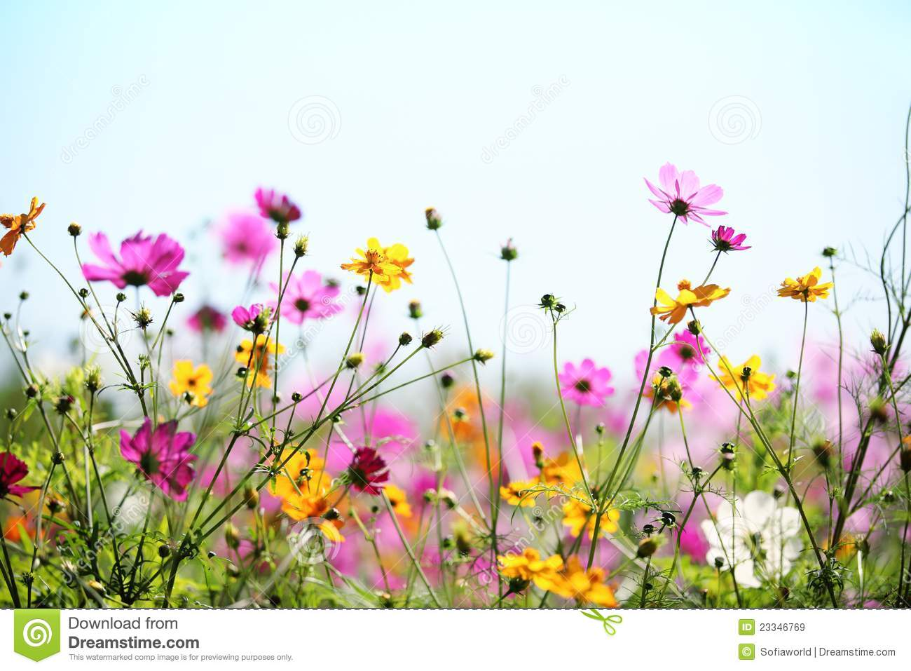 Spring flowers photos free png royalty free Free images spring flowers - ClipartFest png royalty free