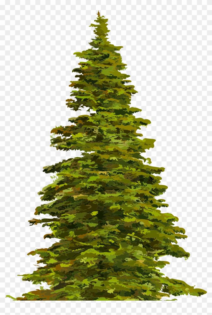 Spruce clipart jpg transparent stock Christmas Tree Clipart - Spruce Clipart, HD Png Download ... jpg transparent stock