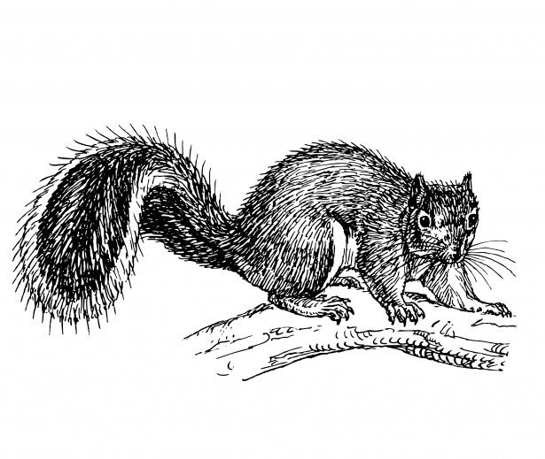Squirrel clipart public domain clipart freeuse stock Squirrel Clipart Illustration Free Stock Photo - Public ... clipart freeuse stock