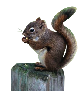 Squirrel clipart public domain vector royalty free library Squirrel | Free Images at Clker.com - vector clip art online ... vector royalty free library