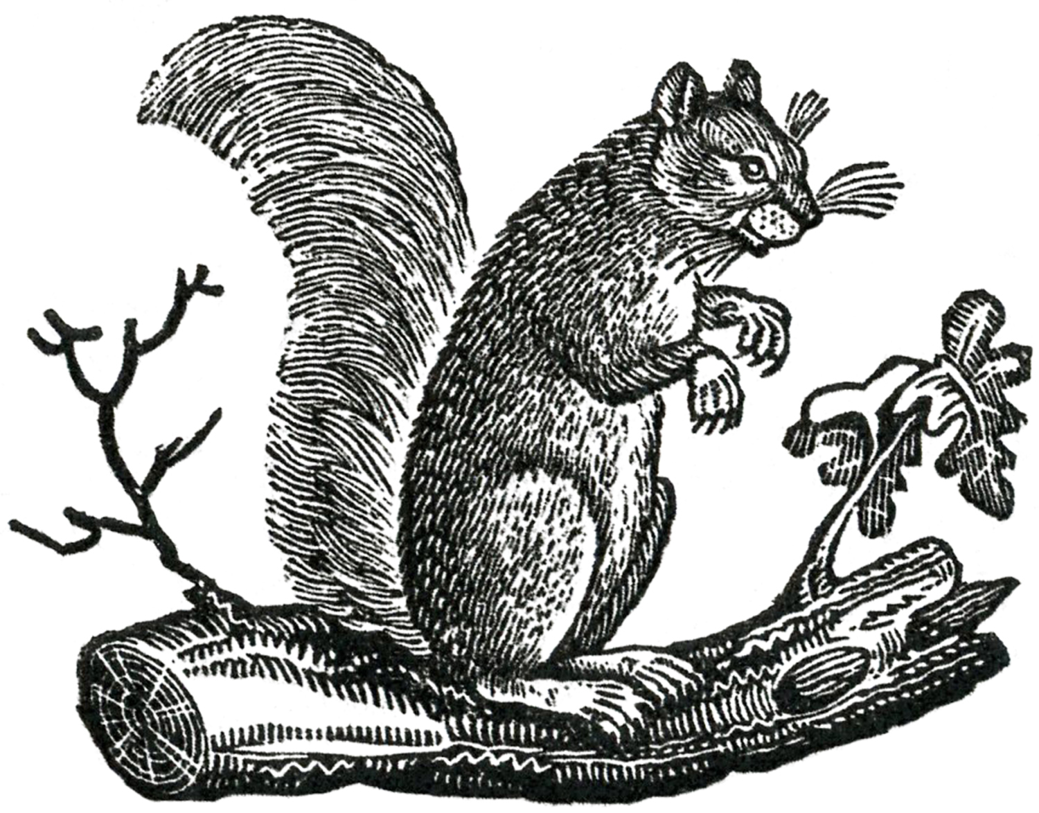 Squirrel clipart public domain image stock 16 Squirrel Images - Adorable! - The Graphics Fairy image stock