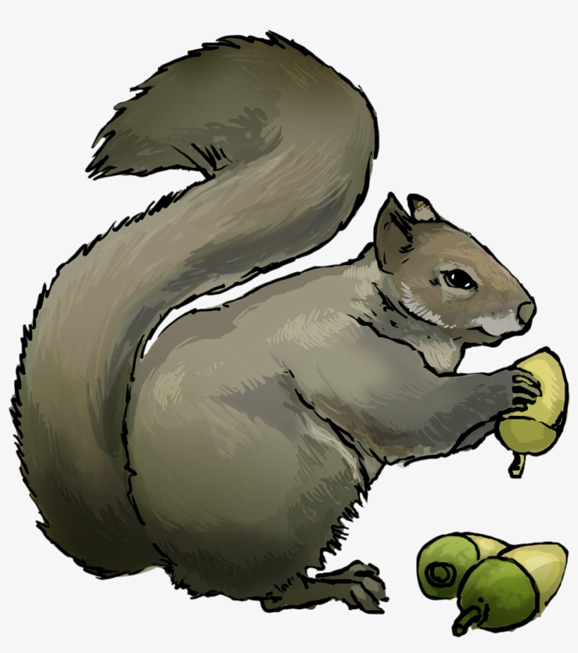 Squirrel clipart public domain png free Free To Use & Public Domain Squirrel Clip Art - Squirrel ... png free