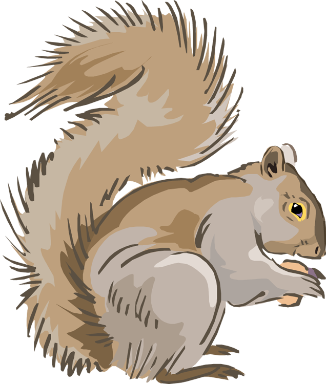 Squirrel in tree clipart