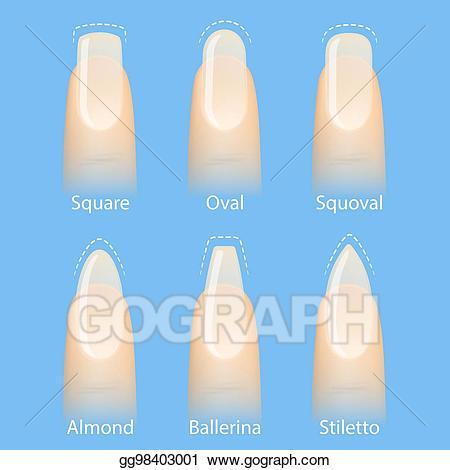 Squoval clipart jpg free stock Vector Illustration - Set of nails shapes. Stock Clip Art ... jpg free stock