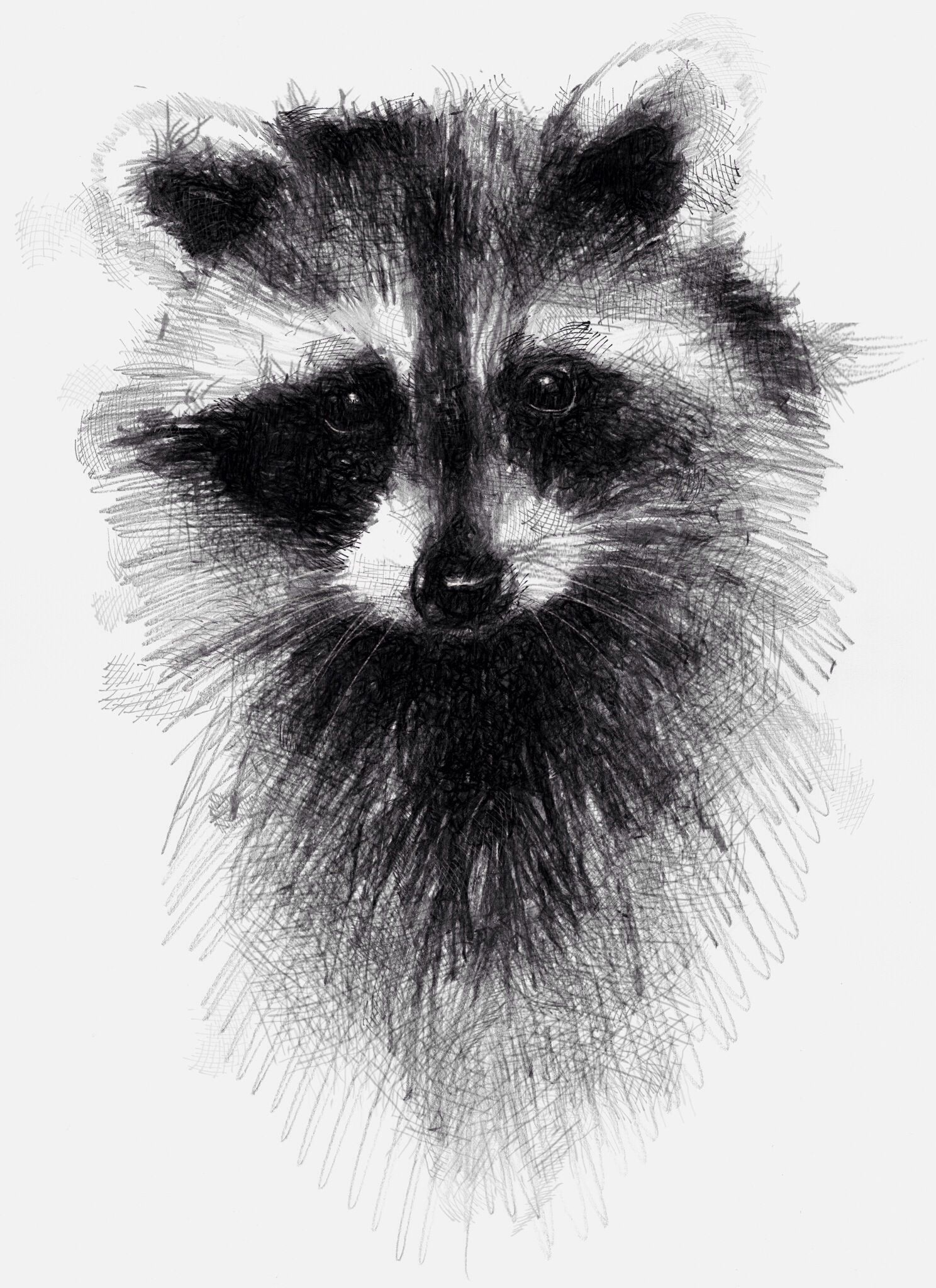 Standing up racoon clipart black and white jpg black and white library Raccoon and 365 | DRAWING IDEAS | Animal drawings, Drawings ... jpg black and white library