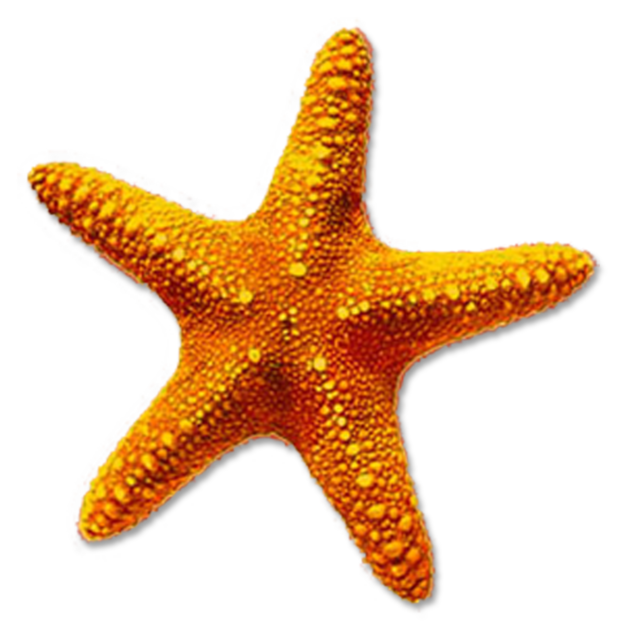 Star fish clipart black and white image transparent stock Starfish PNG Transparent Starfish.PNG Images. | PlusPNG image transparent stock