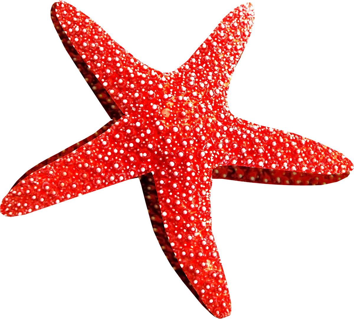 Star fish clipart png svg Starfish PNG images free download svg