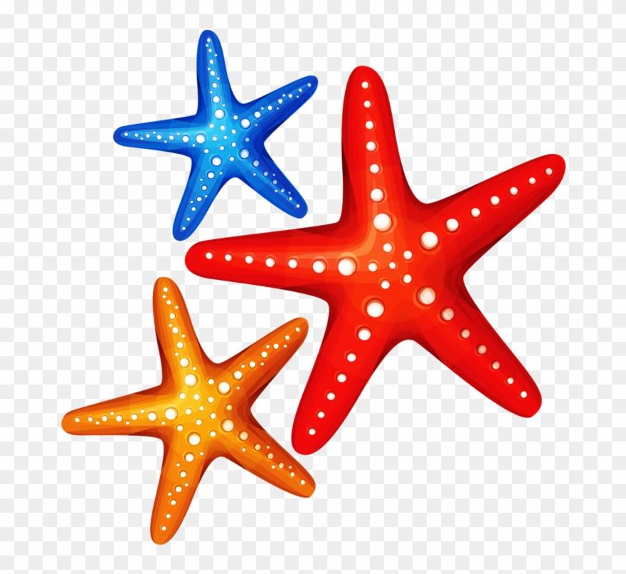 Starfish clipart transparent background jpg library ○•‿✿⁀ocean Safari‿✿⁀•○ - Colorful Starfish Transparent ... jpg library