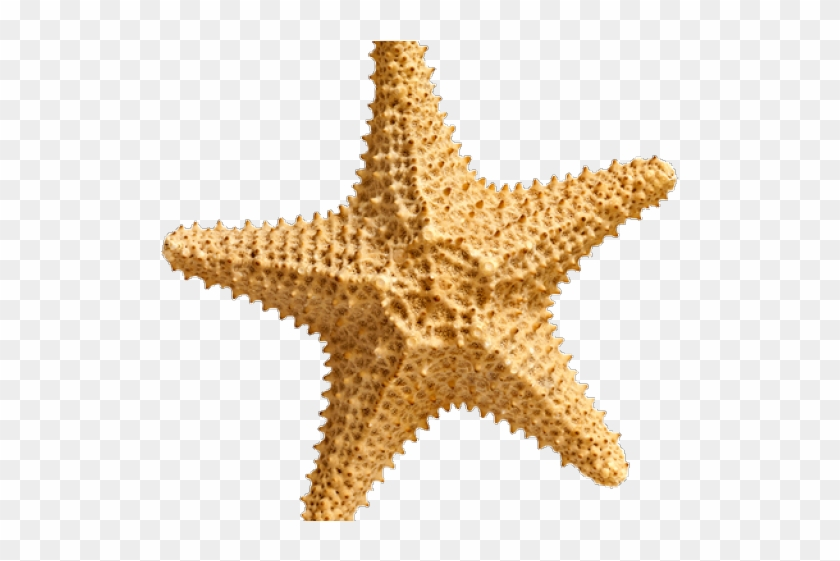 Starfish clipart transparent background graphic freeuse Starfish With Transparent Background, HD Png Download ... graphic freeuse