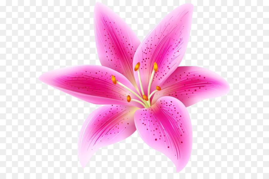 Stargazer clipart graphic black and white download Lilium \'Stargazer\' Pink Flower Clip art - Pink Lily Flower ... graphic black and white download