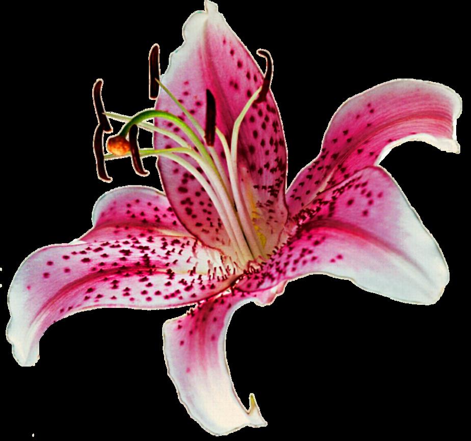 Stargazer clipart picture freeuse Stargazer Clip Art   Clipart Free Download - Clip Art Library picture freeuse
