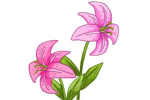 Stargazer clipart png freeuse download Free Stargazer Lily Cliparts, Download Free Clip Art, Free ... png freeuse download