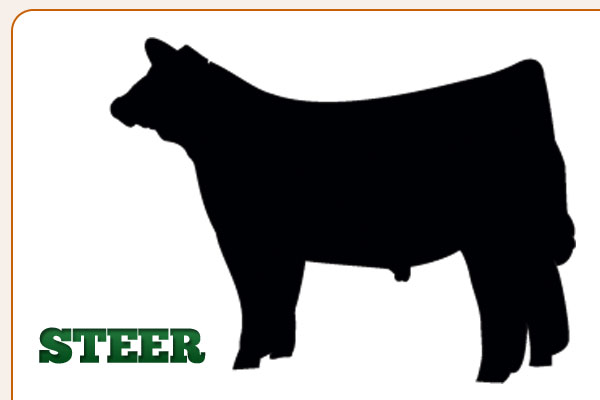 Steer calf clipart 4h banner free download 24+ Steer Clip Art | ClipartLook banner free download