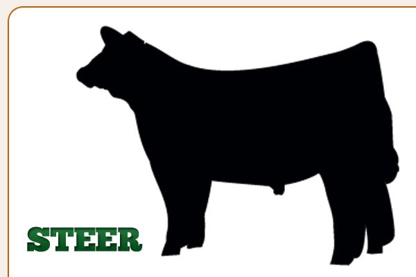 Steer clipart images svg royalty free stock Steer clipart 2 » Clipart Portal svg royalty free stock