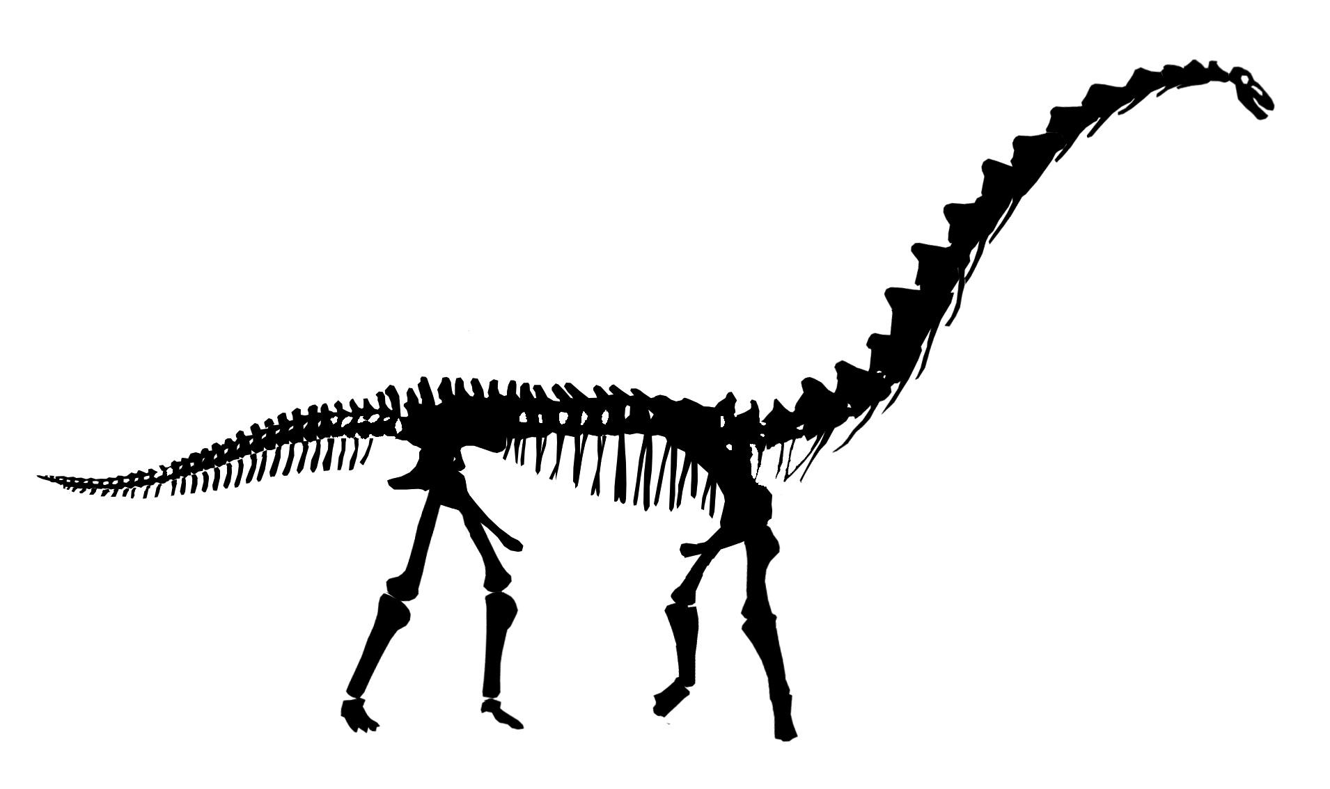 Stegosaurus skeleton silhouette clipart clip black and white Free Dinosaur Bones Clipart, Download Free Clip Art, Free ... clip black and white
