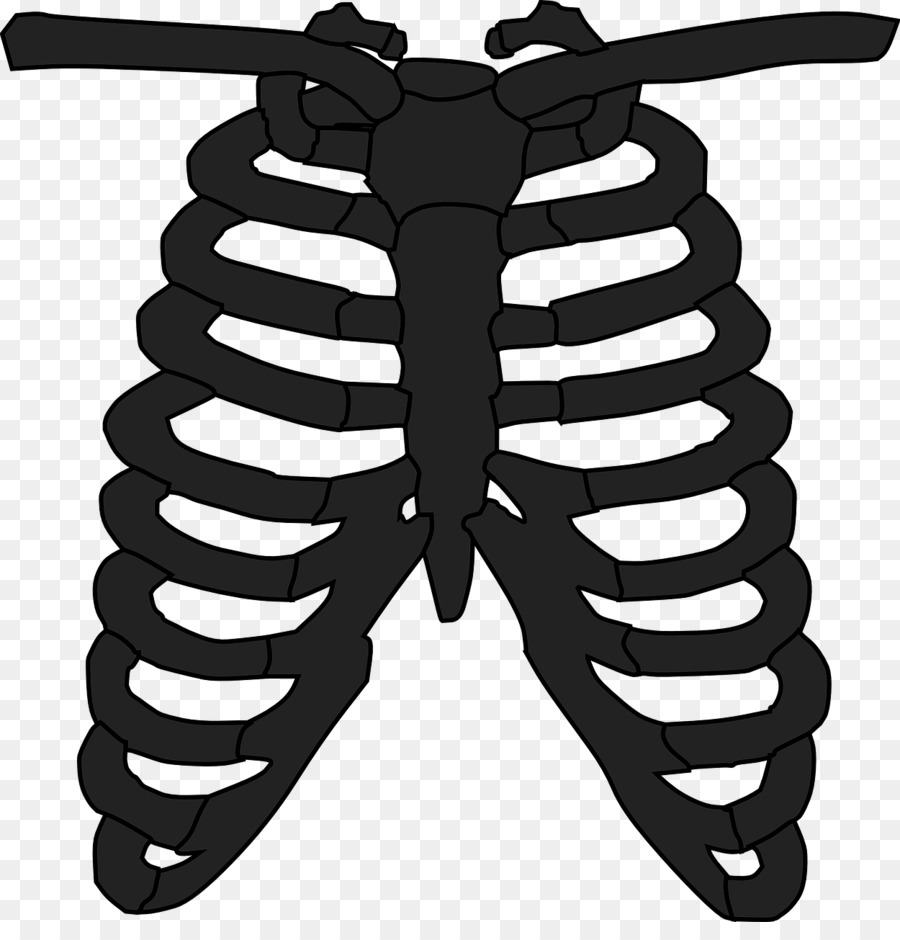 Sternum clipart picture royalty free download White Background clipart - Font, Graphics, Wing, transparent ... picture royalty free download