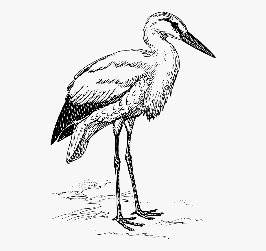 Library of stork vector freeuse library black and white ... (920 x 869 Pixel)